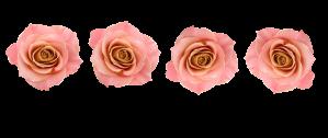 4 rose